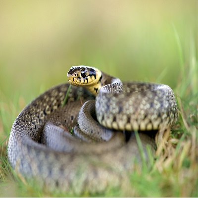 Борьба со змеями ПроКомфорт