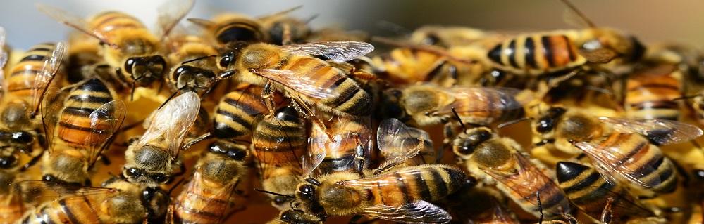 Услуга Борьба с пчелами от ПроКомфорт